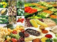 OTHER AGRICULTURAL PRODUCTS